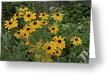 A Close View Of Black-eyed Susans Greeting Card