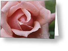 A Close View Of The Top Of A Pink Rose Greeting Card