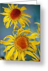 A Close View Of Two Daisies Greeting Card