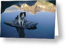 A Collie Perches Itself On A Rock Greeting Card