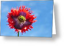 A Colorful Flower With Red And Purple Greeting Card