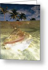 A Conch Shell Rests Beneath The Clear Greeting Card