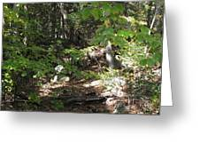 A Country Path Greeting Card