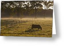 A Cow Grazing In A Field In The Early Greeting Card
