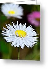 A Daisy Greeting Card
