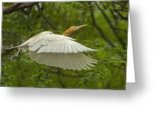 A Day With Egrets Greeting Card