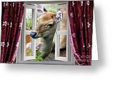 A Deer Enters The House Window. Greeting Card