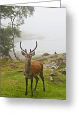 A Deer Stands In A Foggy Meadow By The Greeting Card