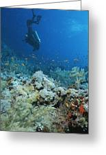 A Diver Explores Coral And Marine Life Greeting Card