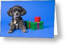 A Dog With Some Gifts Greeting Card