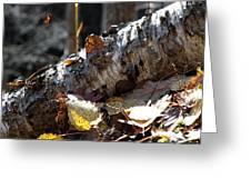 A Fallen Birch Still Claims Its Beauty Greeting Card