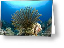 A Feather Star With Arms Extended Greeting Card