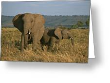 A Female Elephant With Her Baby Greeting Card