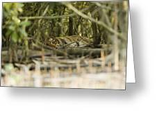 A Female Tiger Rests In The Undergrowth Greeting Card