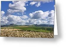 A Field Of Barley . Auvergne. France Greeting Card