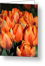 A Field Of Orange Tulips Greeting Card