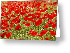 A Field Of Poppies Greeting Card