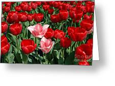 A Field Of Tulips Series 3 Greeting Card