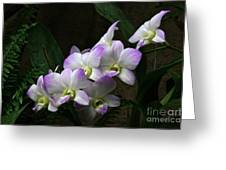 A Flight Of Orchids Greeting Card