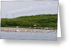 A Flock Of Juvenile And Adult Roseate Greeting Card