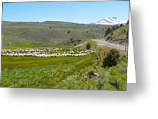 A Flock Of Sheep 2 Greeting Card