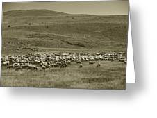 A Flock Of Sheep 4 Greeting Card by Philip Tolok