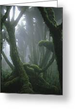A Fog-enshrouded Rain Forest In Rwandas Greeting Card