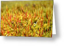 A Forest Of Moss II Greeting Card