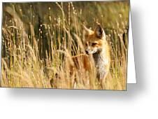A Fox In A Field Greeting Card
