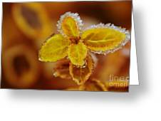 A Frosted Plant Greeting Card