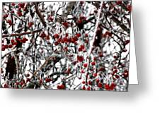 A Frosty Morning. Greeting Card