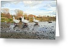 A Gaggle Of Geese II Greeting Card
