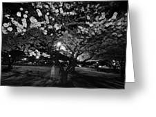 A Ghost In The Cherry Blossoms Greeting Card