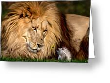A Gift For Cameron Greeting Card by Big Cat Rescue
