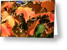 A Glimpse Of Autumn Color Greeting Card