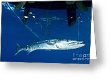 A Great Barracuda Beneath A Boat, Kimbe Greeting Card
