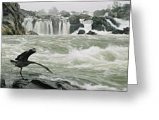 A Great Blue Heron Stretches Its Neck Greeting Card