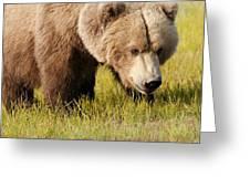 A Grizzly Bear Ursus Arctos Horribilis Greeting Card