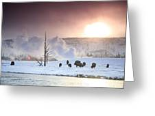 A Group Of Bison Feeding In The Snow Greeting Card by Drew Rush