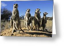 A Group Of Meerkats Standing Guard Greeting Card