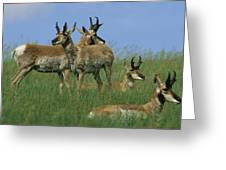 A Group Of Pronghorns In Buffalo Gap Greeting Card