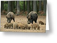 A Group Of Young Wild Boars Nose Greeting Card