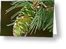 A Growing Pine Cone Greeting Card