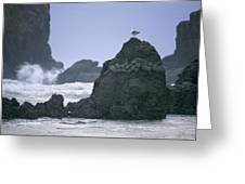 A Gull Sits On A Rock At Cannon Beach Greeting Card