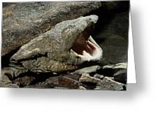 A Hellbender Salamander In Its Rocky Greeting Card