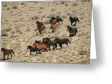 A Herd Of Wild Horses Gallops Greeting Card