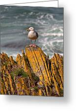 A Herring Gull, Colonsay, Scotland Greeting Card