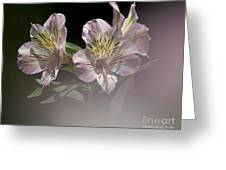 A Hint Of Rose Greeting Card