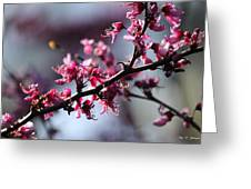 A Hint Of Spring  Greeting Card