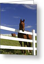 A Horse Peers Over A Fence Greeting Card